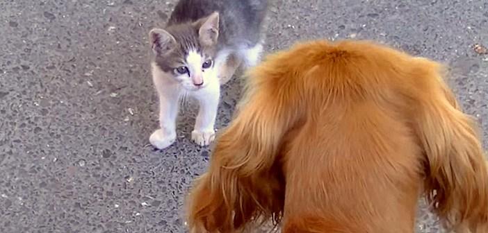 犬と出会った子猫