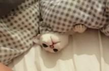 布団の中から猫パンチ