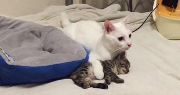 地震から身を挺して子猫を守る猫