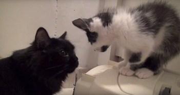 喧嘩する猫と子猫