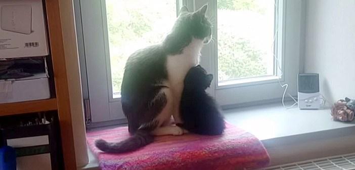 寄り添う先住猫と子猫