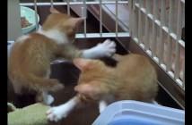 シッポを追いかける子猫