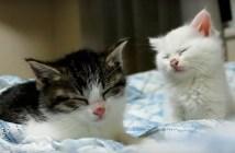 眠気に耐える子猫