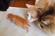 子猫を見守る大人猫