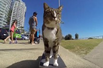 スケボーを乗りこなす猫