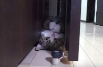 すきまが大好きな猫のまる