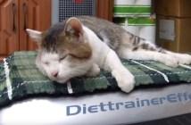 ダイエットマシーンに揺られる猫