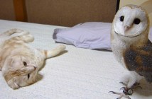 微妙な距離感のフクロウと猫