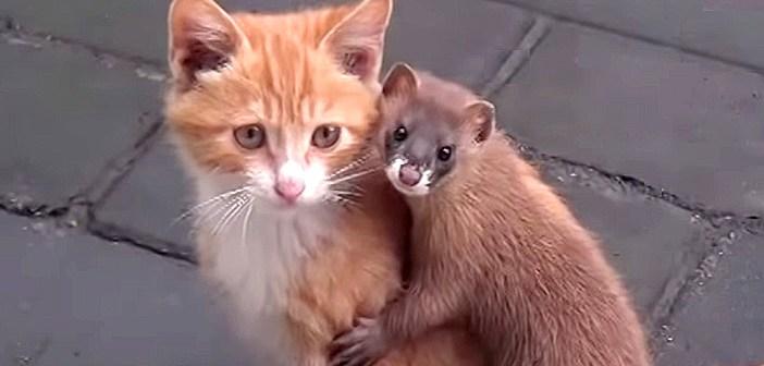 仲良しなイタチと子猫