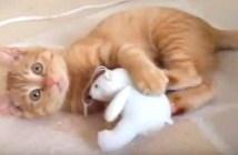 妙な動きの子猫を撮影していたら…