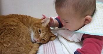 眠たい猫と遊びたい赤ちゃん