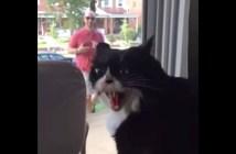 激おこな猫