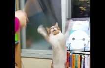 猫じゃらしを掴もうと高速パタパタ