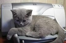 プリンターに起こされる子猫