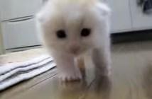 ずんずん子猫