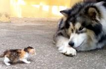 子猫と大型犬