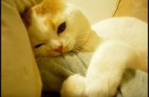猫の乳歯が抜けた瞬間
