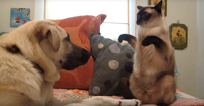 猫パンチ構え