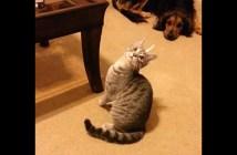 頭の上にテープがくっついた猫