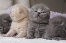 一列になって鳴く子猫