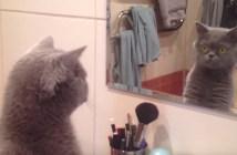 鏡に映る自分を気にする猫