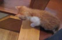 階段で取り残された子猫