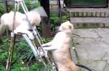 高速猫パンチする猫と冷静に対処する猫