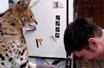 強い猫パンチ