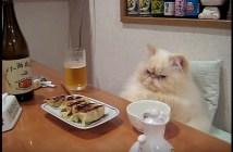 晩酌する猫