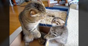父親と子猫