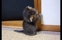 子猫の立ち始め