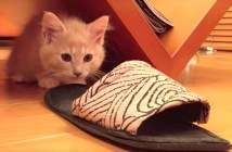 突撃する子猫