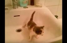シンクでツルツル滑る子猫