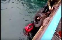 船の下の猫を助ける男性