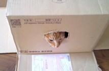 ひとりになりたくてダンボール箱のふたを閉める猫