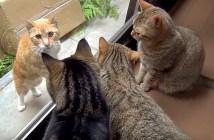 野良猫を見にくる猫