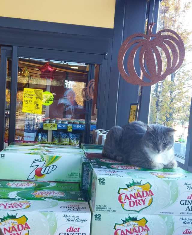スーパーの店内でお昼寝する猫