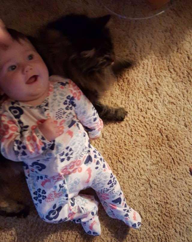 赤ちゃんの椅子になるメインクーン