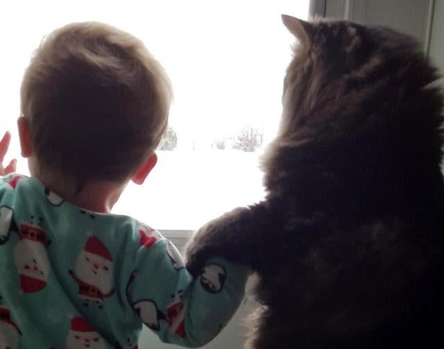 赤ちゃんと手をつなぐ猫