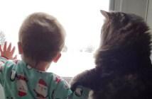 兄弟のような赤ちゃんと猫