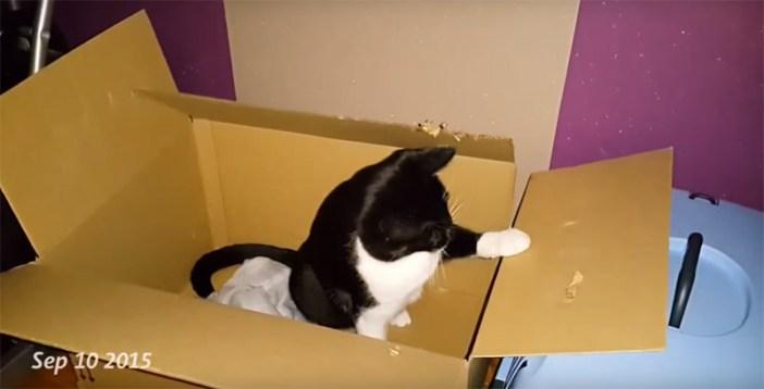 ダンボールをもらって嬉しそうな猫