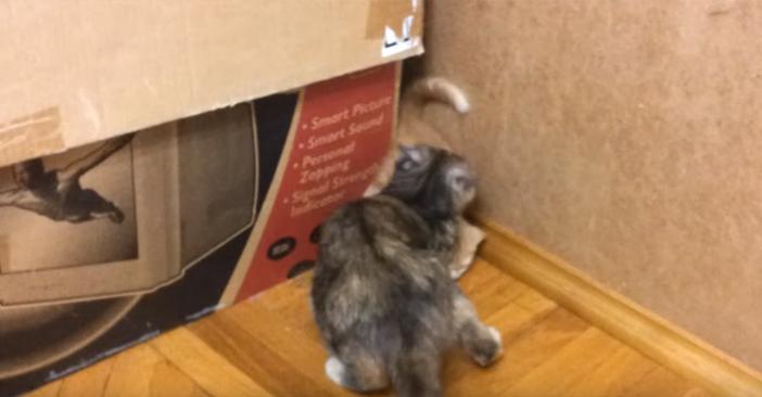 母猫が子猫をキャッチ