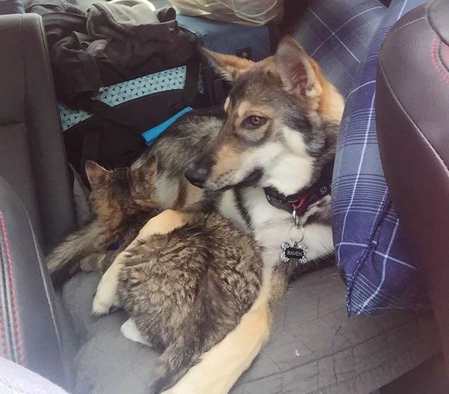 車に乗る犬と猫