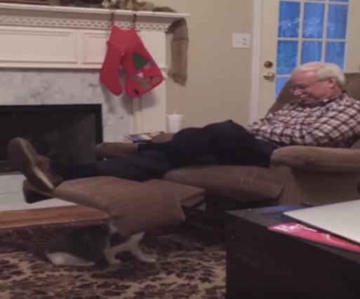 おじいちゃんの様子を伺う猫