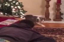 死んだフリをする飼い主さんを見つけた猫