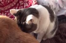 同居猫に頭を預ける猫