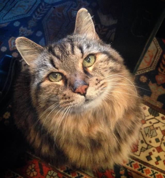世界最高齢の猫コーデュロイ