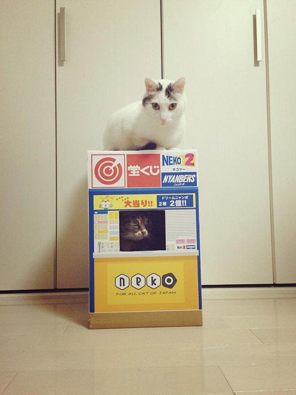 宝くじを買いにくる猫