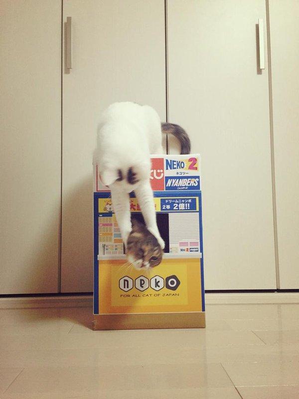 販売員さんの頭を掴む猫