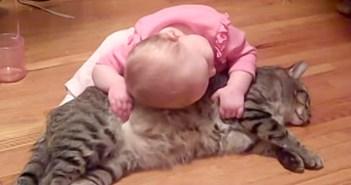 猫が大好きな赤ちゃん